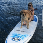 paddleboard dog nh