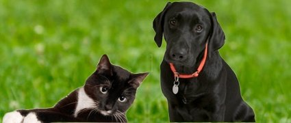 Fresno Veterinary Specialty and Emergency Center - 24 Hour
